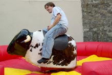 Hire Rodeo Bull